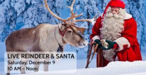LIVE Reindeer & Santa