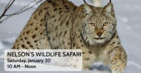 Nelson's Wildlife Safari