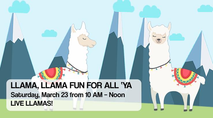 Llama, Llama – Fun For All 'Ya!